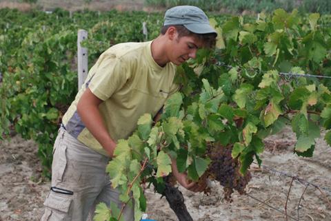 lavoro-agricolo-stagionale-giovani
