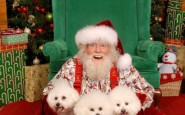 mall-santa-poodles