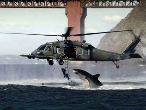 sharkfishing