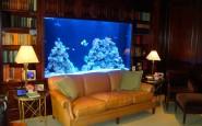 elegant Aquarium interior Design
