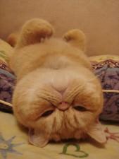 funny-sleeping-cats-4