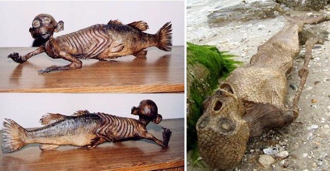 Sirene 12 lo shock della sirena morta sulla riva - Immagini della vera sirena ...