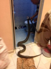 wc_snake_03