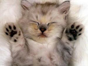 Blinking-Cat