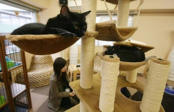 Cat Cafes Attract People In Tokyo