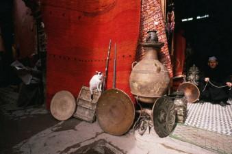 gatti-a-marrakech