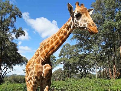 giraffa_11xin2--400x300
