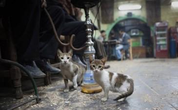 il-cairo-dove-il-gatto-e-il-re-degli-animali