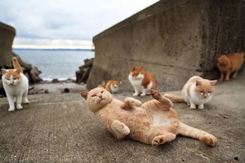 isola-dei-gatti