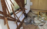 A puma sits atop a kitchen counter inside a residential home in Santiago