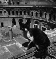 roma-e-i-gatti