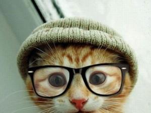 shoreditch-cat