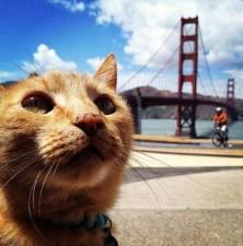 stati-uniti-il-paese-cat-friendly
