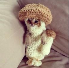 wasabi-chan-cat-mushroom-suit-ig.jpg