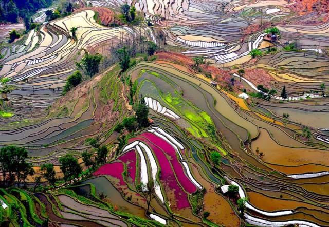 27-Terrace-Rice-Fields-China