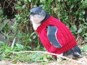 350x261xresizedimage350261-Knitted-jumper-lores_2.jpg.pagespeed.ic.ZbPLL1MJ6-