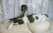 605x378xfunny-sleeping-cats-18.jpg.pagespeed.ic.-mWJ2c5lvT