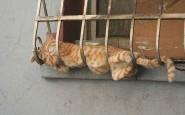 605x404xfunny-sleeping-cats-7.jpg.pagespeed.ic.tfyUrglZvq