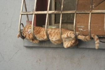 605x404xfunny-sleeping-cats-7.jpg.pagespeed.ic.tfyUrglZvq