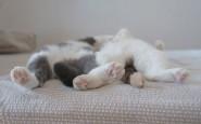 605x434xfunny-sleeping-cats-3.jpg.pagespeed.ic.-mPJHp78CF