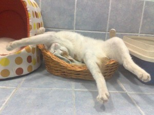 605x454xfunny-sleeping-cats-10.jpg.pagespeed.ic.INRM_LtMUE