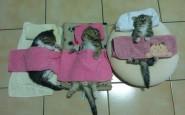 605x454xfunny-sleeping-cats-16.jpg.pagespeed.ic.PvbdYcxL6V