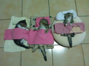 605x454xfunny-sleeping-cats-16.jpg.pagespeed.ic.PvbdYcxL6V