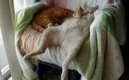 605x454xfunny-sleeping-cats-20.jpg.pagespeed.ic.DsFl6syD_K