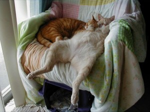 605x454xfunny-sleeping-cats-20.jpg.pagespeed.ic.DsFl6syD_K