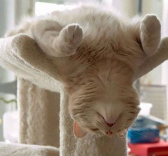 605x562xfunny-sleeping-cats-27.jpg.pagespeed.ic.8DapHSi8gV
