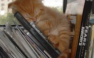605x751xfunny-sleeping-cats-5.jpg.pagespeed.ic.SctrXIJg4P