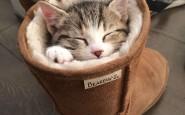 605x807xfunny-sleeping-cats-6.jpg.pagespeed.ic.okqB9iFx2p