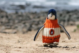 650x433xHipster-Penguins-3-650x433.jpg.pagespeed.ic.hsLg3zPout