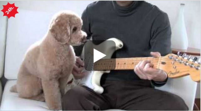 barboncino chitarra