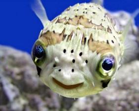 cute smiling animals 1