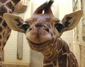 cute smiling animals 11