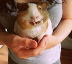 cute smiling animals 12