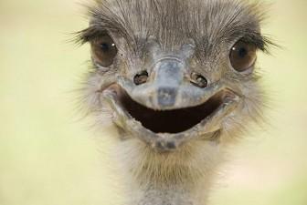 cute smiling animals 15