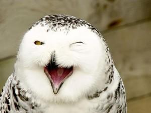 cute smiling animals 17
