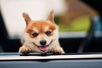 cute smiling animals 21