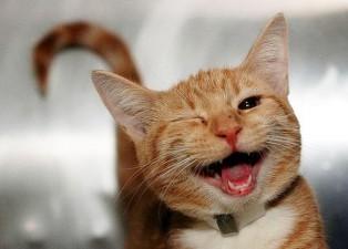 cute smiling animals 22