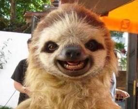 cute smiling animals 251