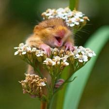 cute smiling animals 33