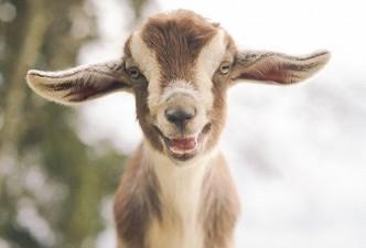 cute smiling animals 4