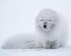 cute smiling animals 7