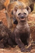 cute smiling animals 9
