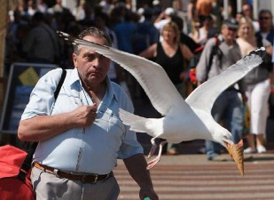 perfectly timed photos 19