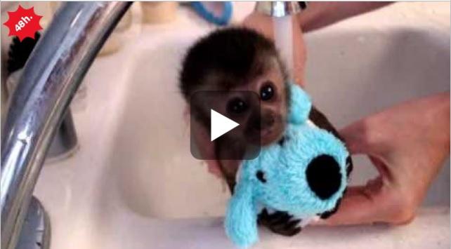 Il bagnetto della piccola scimmietta - Farfalline nere in bagno ...