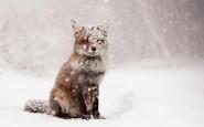 670x446xamazing-fox-photos-1.jpg.pagespeed.ic.9775ySkzO4
