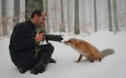 670x446xamazing-fox-photos-20-1.jpg.pagespeed.ic.yWi8A3w5nO